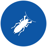 invasive-pests-5ae38f5fcaacf