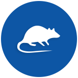 rodents-pests-5ae38f55d8f17