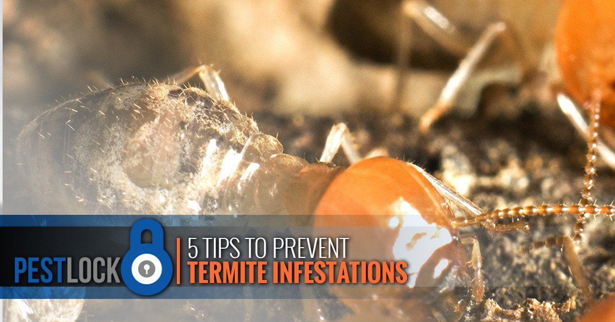 5-tips-to-prevent-termite-infestations-5b64740869cde