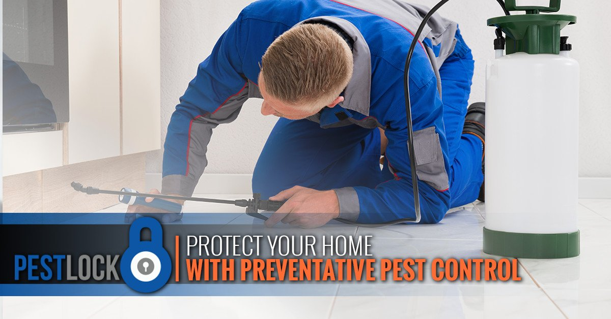 Protect-your-home-with-preventative-pest-control-5b647404a4d9d