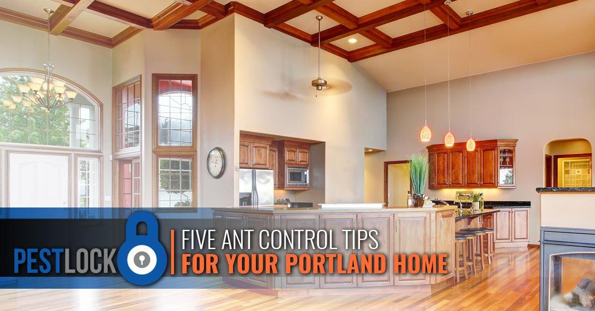 Five-Ant-Control-Tips-5b9a7c159c673