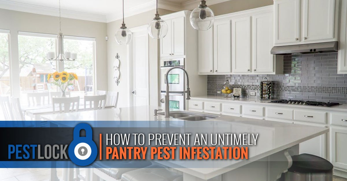 How-to-Prevent-an-Untimely-Pantry-Pest-Infestation-5b9a74a3c3647