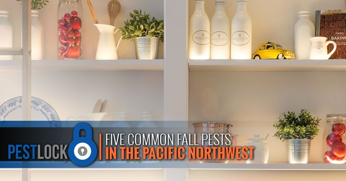 Five-Common-Fall-Pests-in-the-Pacific-Northwest-5bbcd6e16a959