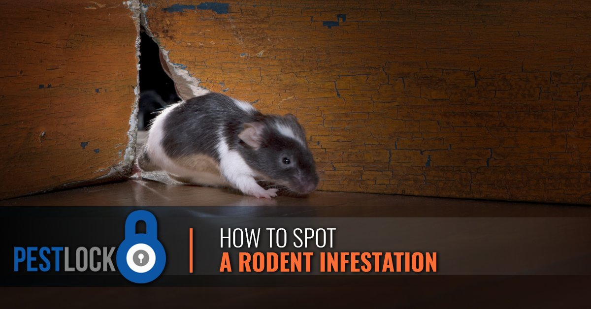 How-To-Spot-A-Rodent-Infestation-5c3fb6f941280