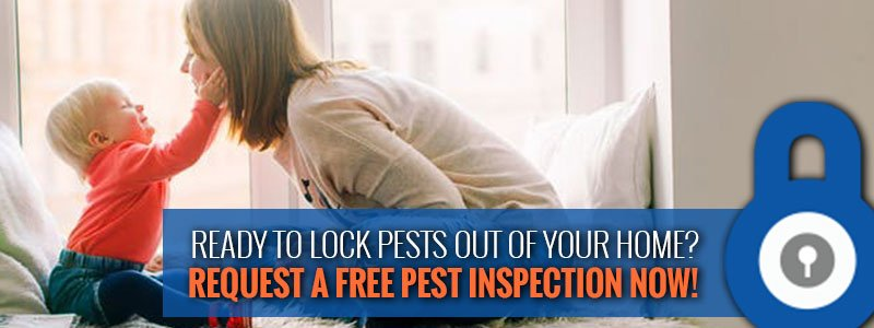 request a free home inspection from PestLock