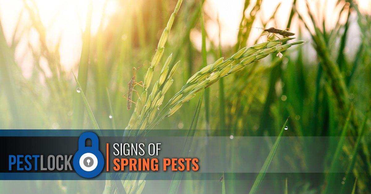 Spring-Pests-5c73ff5fd24c4