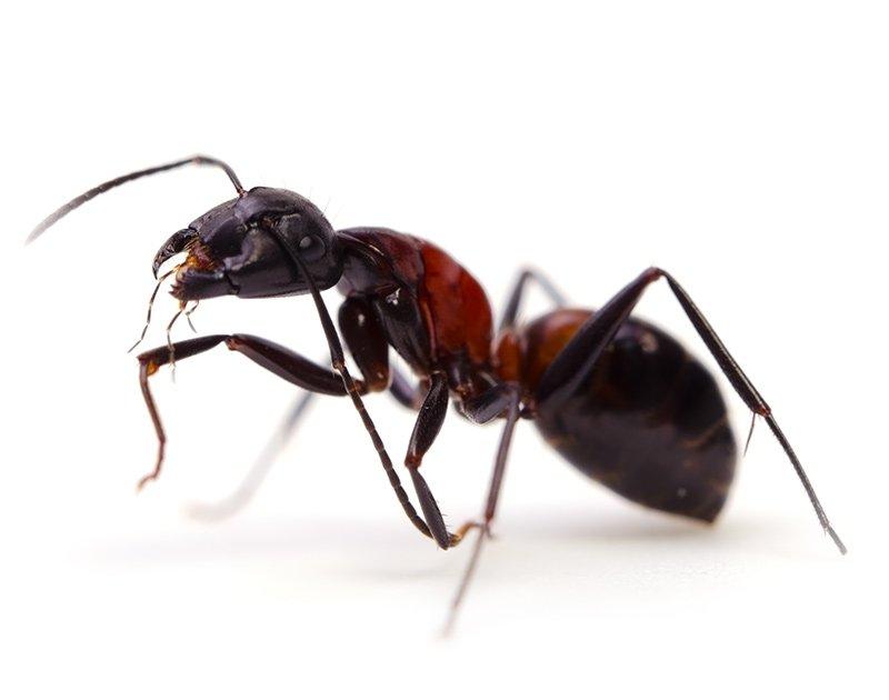 Ant-vancouver-5cbdeef5ef083