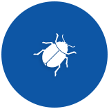 beetles-pests-5ae38f63ef079